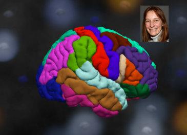 Brain_postcard2